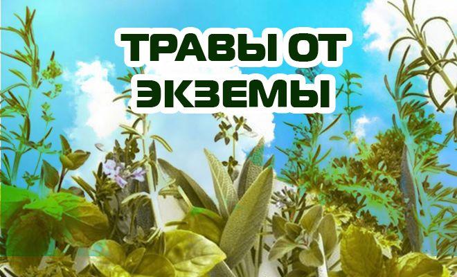 Травы от экземы