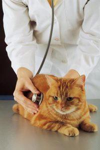 Как лечить конъюнктивит у животных?