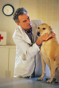 Конъюнктивит у животных: причины и лечение