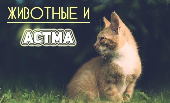 Животные и астма