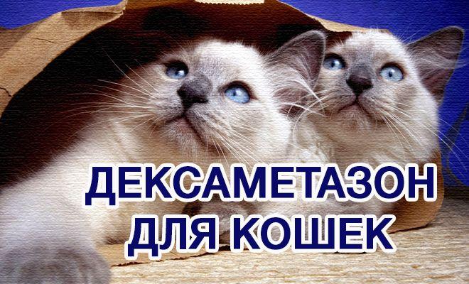 Дексаметазон для кошек. Как использовать
