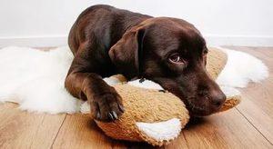 Антигистаминные препараты собакам: показания