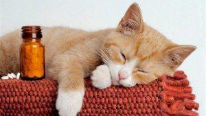 Лекарства от аллергии для кошек