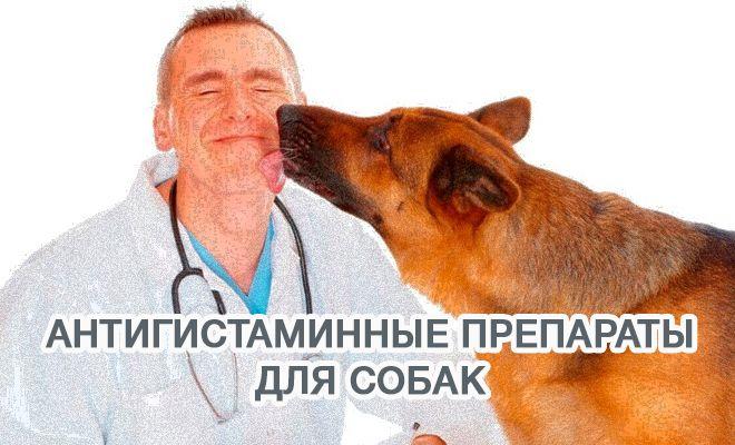Антигистаминные препараты для лечения собак