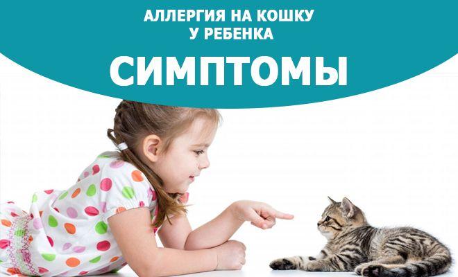 Аллергия-на-кошку-у-ребенка-симптомы