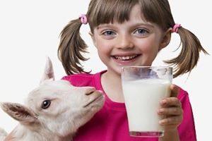 Аллергия на козье молоко у ребенка