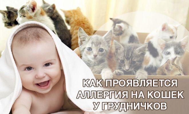 Как проявляется аллергия на кошек у грудничков