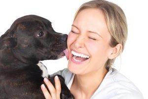 Аллергены в собачьей слюне