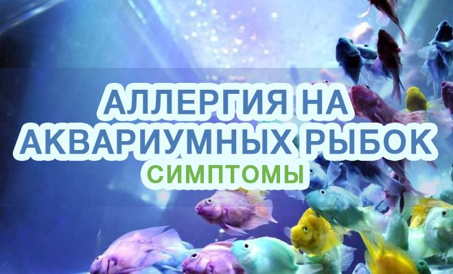 Аллергия на аквариумных рыбок - симптомы