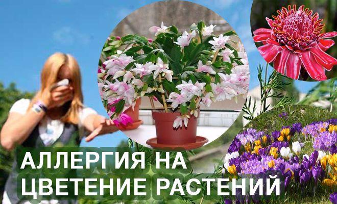 Аллергия на цветение растений