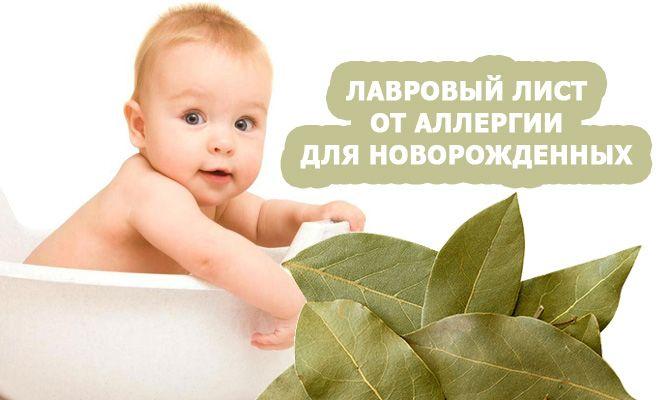 Лавровый лист от аллергии для новорожденных