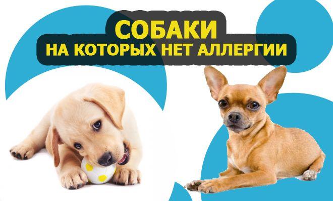 Собаки, на которых нет аллергии