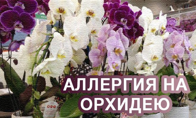 Аллергия на орхидею