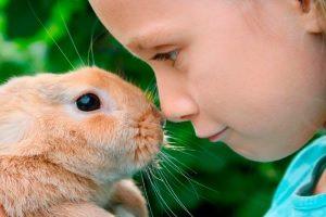 Реакция на кролика