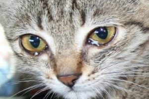 Реакция у кота