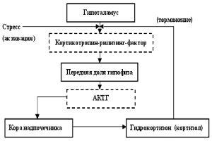Механизм действия глюкортикоидов
