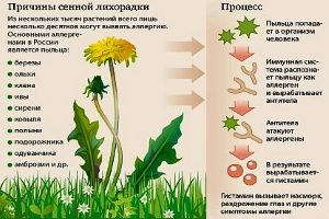 Причины сенной лихорадки