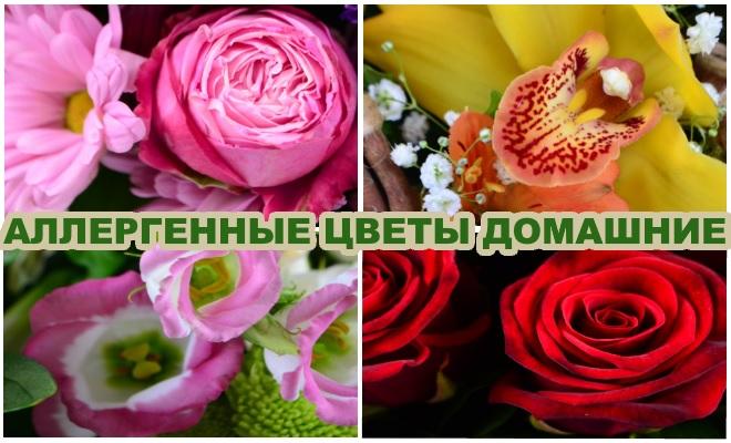 Аллергенные цветы домашние