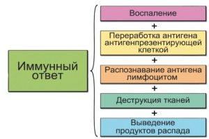 Функцмм иммунной системы