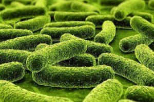 Палочка инфекции