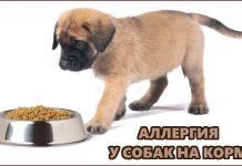 Аллергия у собак на корм
