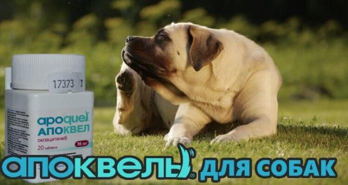 Апоквель для собак