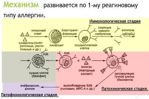 Механизм 1-го типа реакции