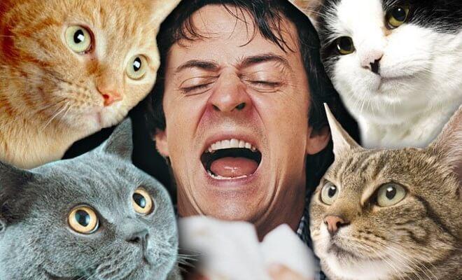 Аллергик и кошки