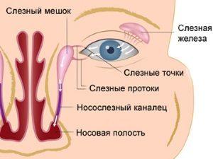 Слезная железа у человека