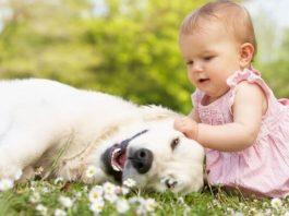 Собака как тренер иммунитета